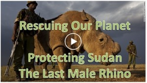 Sudan the last northern white rhino after 40 million years.